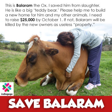 Save Balaram and Gita