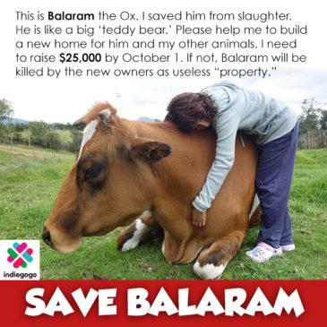 Save Balaram and Gita