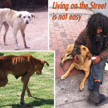 The Street dogs of Bogota