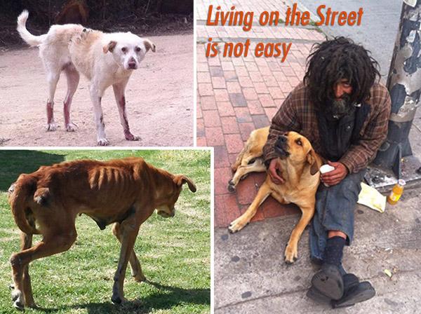 LivingOnTheStreet600