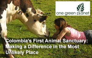 One Green Planet: Colombia's First Animal Sanctuary: Making a Difference in the Most Unlikely Place