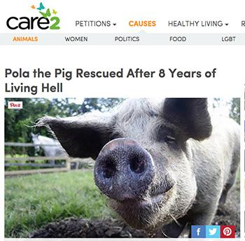 CARE 2: Pola the Pig Rescued After 8 Years of Living Hell