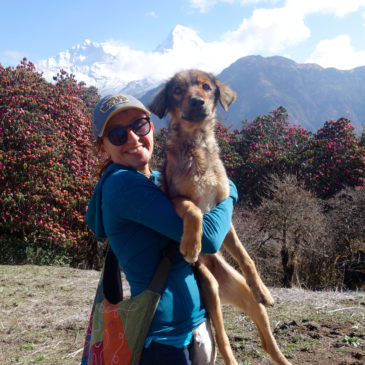 Yudhi, A dog in Nepal.
