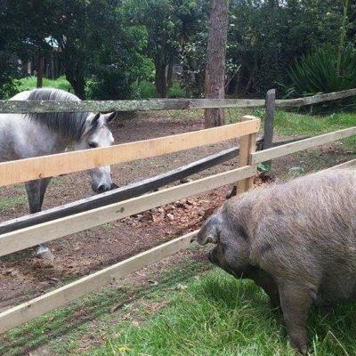Pola meets Syama