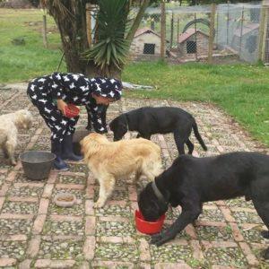 Feeding the neighbors dogs