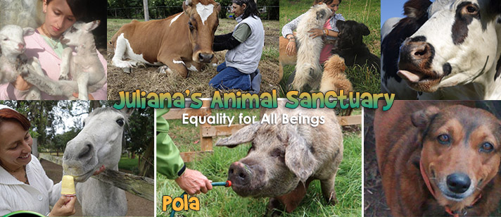 Crowdfunding campaign supports Colombia's only animal sanctuary