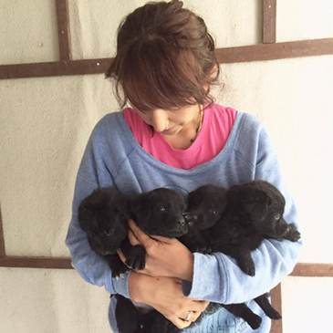 Abandoned puppies need help and a home