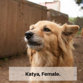 Katya, Female.
