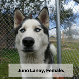 Juno Laney, Female.