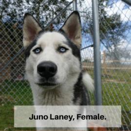 Juno Laney, Female.