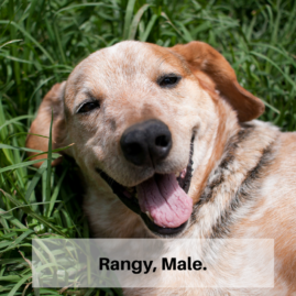 Rangy, Male.