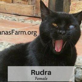 Rudra, Female