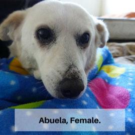Abuela, Female.