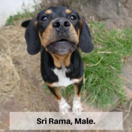 Sri Rama, Male