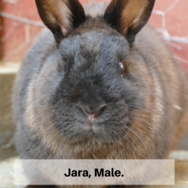 Jara, Male.
