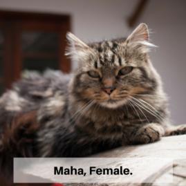 Maha, Female.