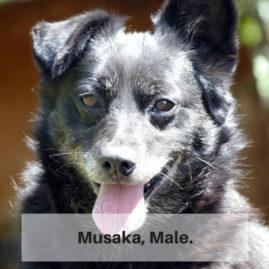 Musaka, Male.