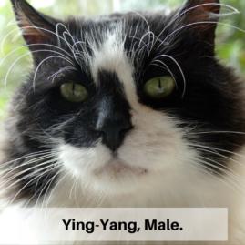 Ying-Yang, Male.