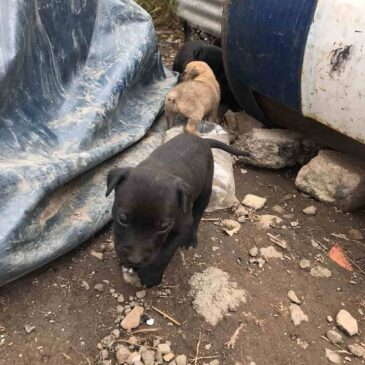 Eight newborn puppies abandoned in a car workshop