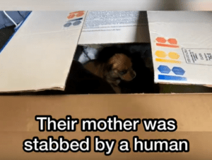 Puppies are sitting in the box