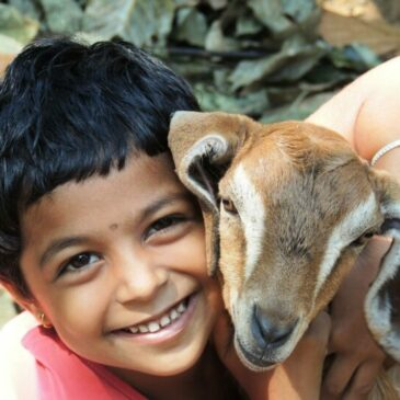 Why an animal sanctuary is perfect for your next family trip