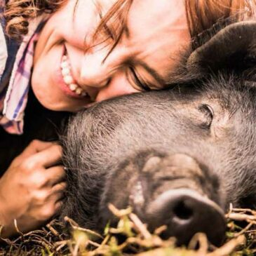 Animal sanctuary for Pigs – why they need our help?