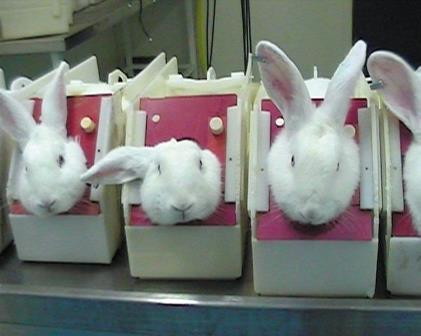 rabbits_animal_testing