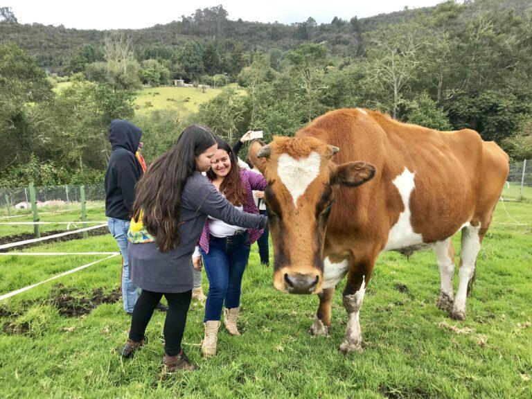 cow-and-human