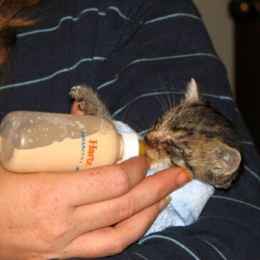 Bottle-Feeding Kittens – Everything You Need to Know