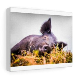 Canvas Gallery Peter Piper the pig